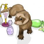The Ferret - Another pet image for Donna Moore. This one she liked. - Digital
